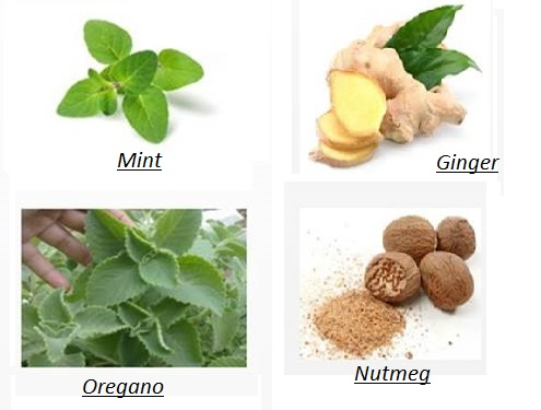 Mint Oregano Ginger Nutmeg- The best family Doctor