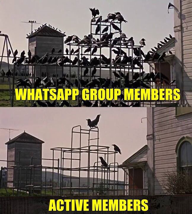 Whatsapp active group member